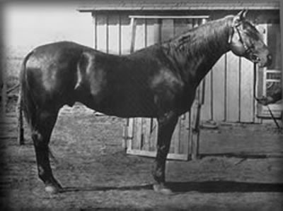 Peter McCue, forefather of many of the outstanding Quarter Horses