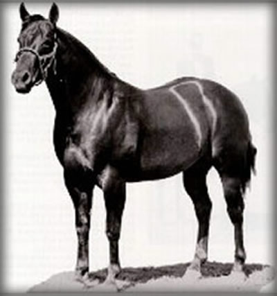 Poco Bueno, a legend in Quarter Horses whose progeny can be found at Powder River Horses Ranch